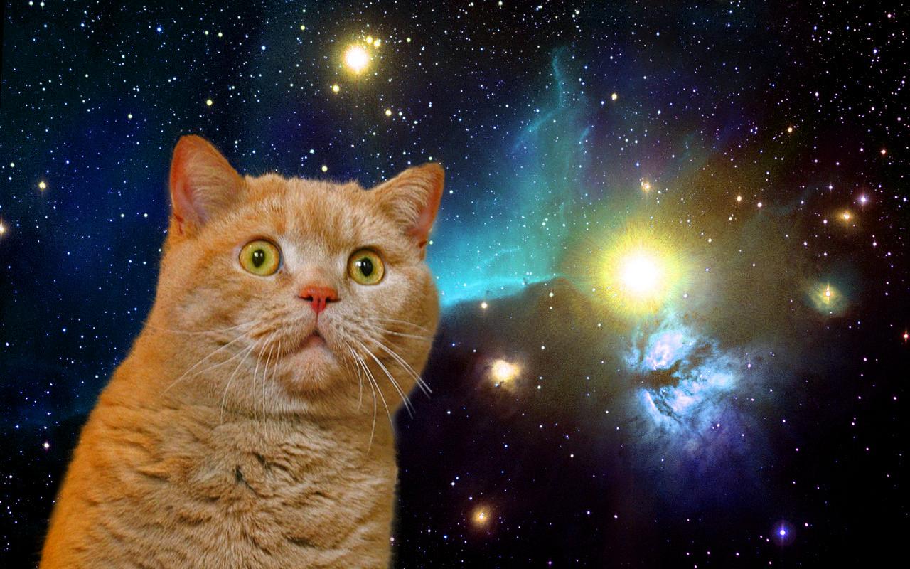 Сказка про планеты: как котик Брэдли решил путешествовать