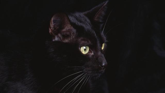 Сказка про кошку: как Бредли Купер встретил необычную соседку
