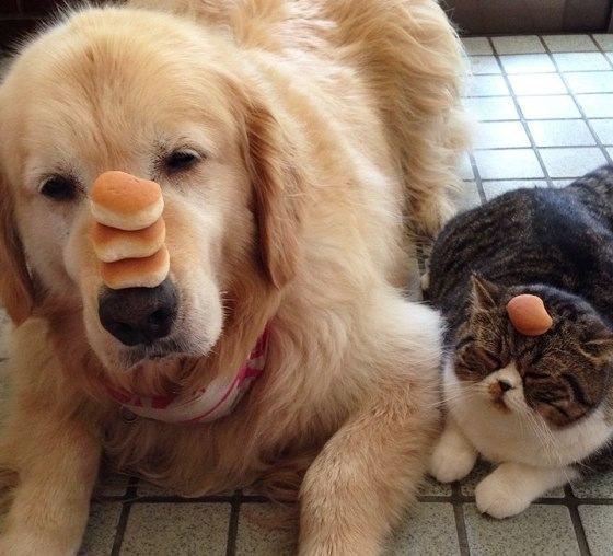 Сочинить сказку про собаку: можно ли превратиться из плохого в хорошего?