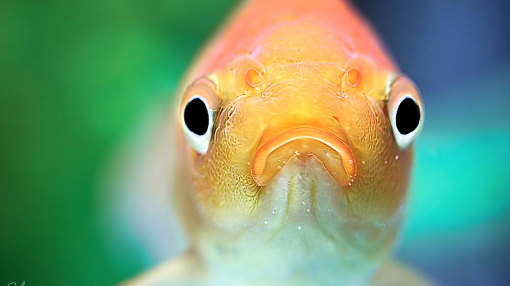 Казка про рибку