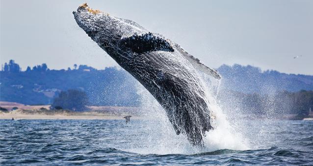 Казка про кита