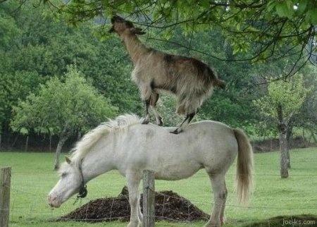 Казка про козла