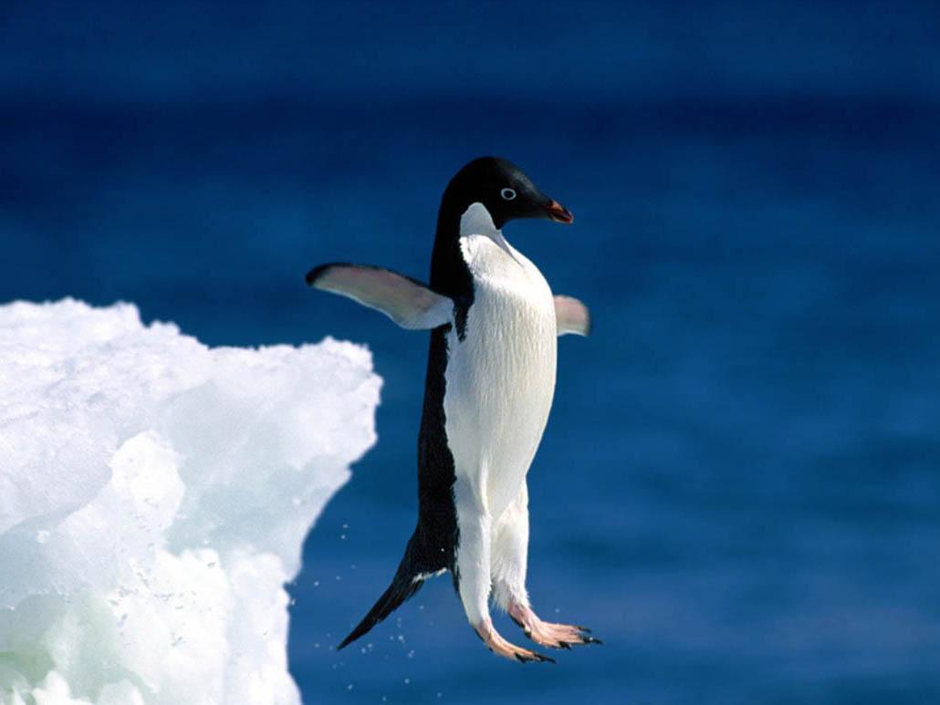 отношение этой картинки про человека пингвина своими, несмотря сложность
