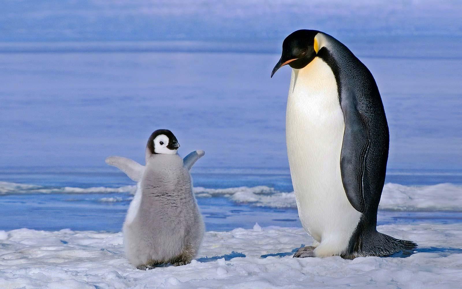 Сказка про экологию: как пингвину Джиму удалось спасти ледник