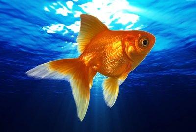 Сказка про золотую рыбку для детей