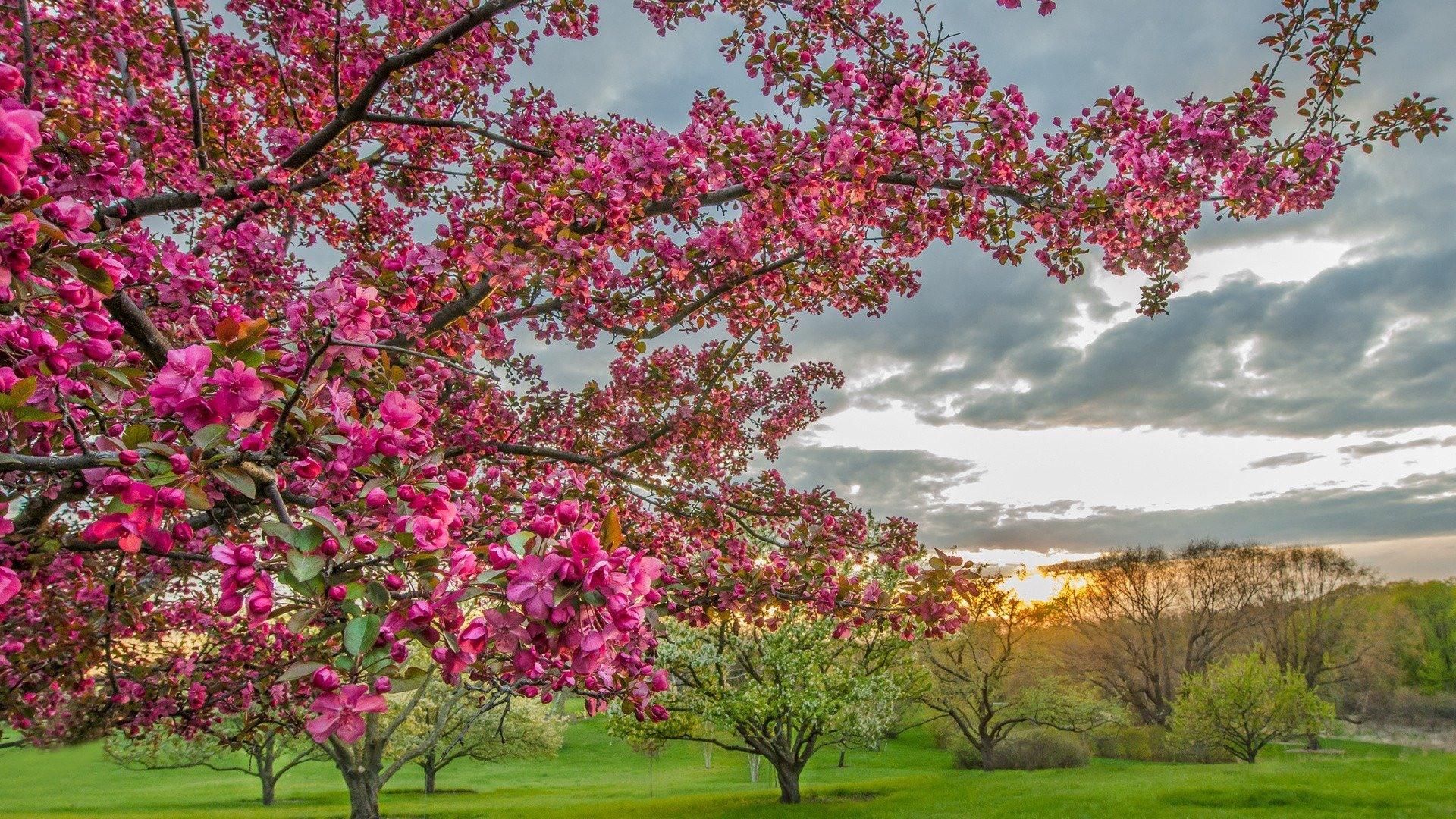 Твір про весну